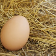 Stock Photo: Egg in bird nest