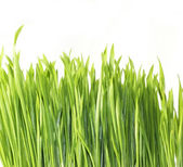 Grass isolated on white — Stock Photo