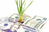 Money plant concept — Stock Photo