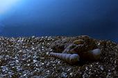 Shells in dark — Stock Photo