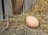 Jedno vejce — Stock fotografie