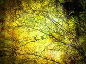 Grunge Retro Tree Texture Background — Stock Photo