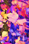 Autumn Colored Leaves Background — Стоковое фото