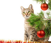 Domestic cat and Christmas tree — Stock Photo