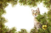 Christmas card with cat — Stock fotografie