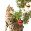 Domestic cat and Christmas tree — Stock Photo #15444215