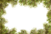 Border, frame from christmas tree branches — Stock Photo