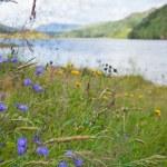 Scottish summer landscape with lake — Stock Photo #12534226