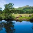 Scotland, summer landscape — Stock Photo #12549477