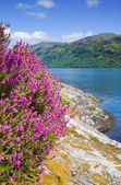 Scottish summer landscape with lake — Stock Photo