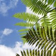 Fern leaves against blue sky - Stock Photo
