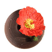 Iceland poppy and a bud in a round ceramic vase, isolated — Stock Photo