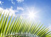 Palmblad och blå himmel med stra-formade sol — Stockfoto