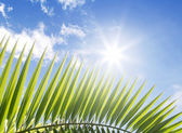 Palm leaf and blue sky with stra-shaped sun — Stock Photo