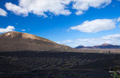 La Geria, Lanzarote — Stock Photo