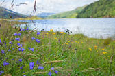 Scottish summer landscape — Stock Photo