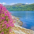 Stock Photo: Loch Lomond