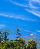 Northern Tenerife, view over tree tops towards Teide — Stock Photo