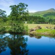 Scotland, summer landscape — Stock Photo