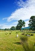 Szkocji, krajobraz lato — Zdjęcie stockowe
