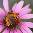 Small Tortoiseshell and a bee — Stock Photo