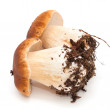 Stock Photo: Boletus edulis