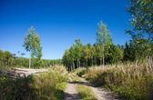 Sommer auf der nordhalbkugel — Stockfoto