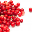 Freshly picked lingonberry — Stock Photo