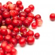 Stock Photo: Freshly picked lingonberry