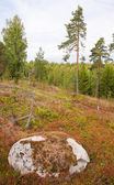 Finland, late summer — Stock Photo