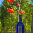Stock Photo: Ash berry bouquet in blue bottle