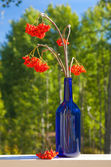 Ash berry bouquet in a blue bottle — Stock Photo