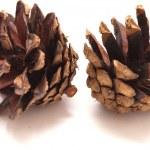 Pine cone — Stock Photo #31060657