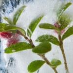 Постер, плакат: Icy plants