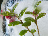 Icy plants — Stock Photo