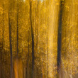Stock Photo: Autumnal forest abstraction