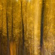Autumnal forest abstraction — Stock Photo