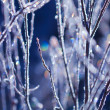 frozen plants — Stock Photo