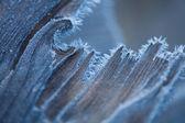 Wood in hoarfrost — Stock Photo