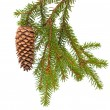 Foto Stock: Spruce tree branch with cone isolated on white
