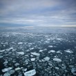Drift ice — Stock Photo #41345803