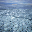 Drift ice — Stock Photo #41345865