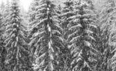 Heavy snowfall — Stock Photo