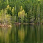 Spring lake reflections — Stock Photo #46376265