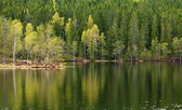 Spring lake reflections — Stock Photo