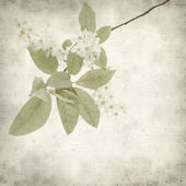 Textured old paper background with — Stock Photo