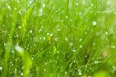 Morgon gräs — Stockfoto