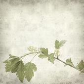Textura antigua fondo de papel con — Foto de Stock
