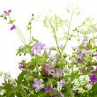 Wild flower bunch — Stock Photo #47386203