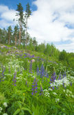 Finnish summer — Stock Photo